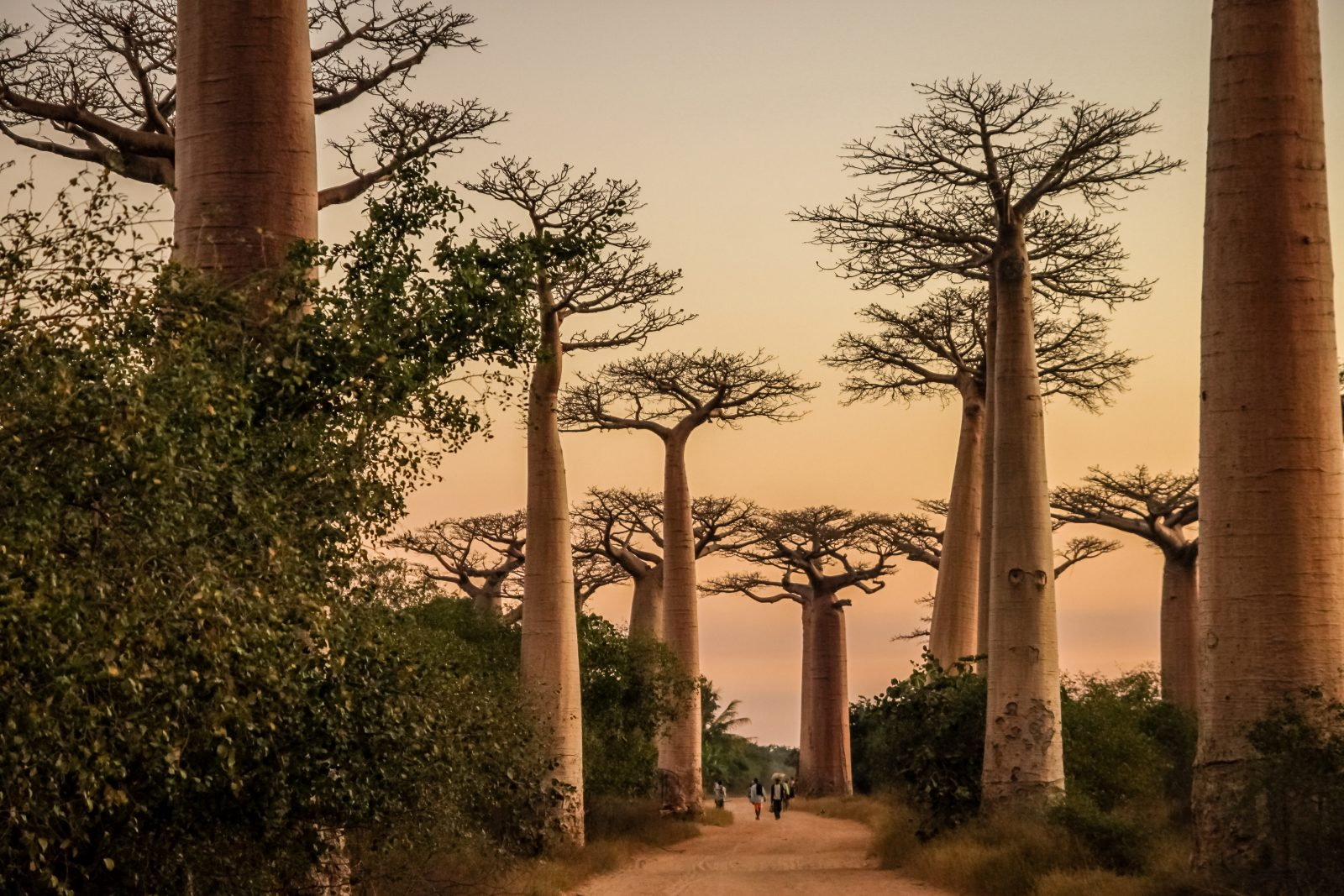 Travelling Down Memory Lane to Madagascar 7