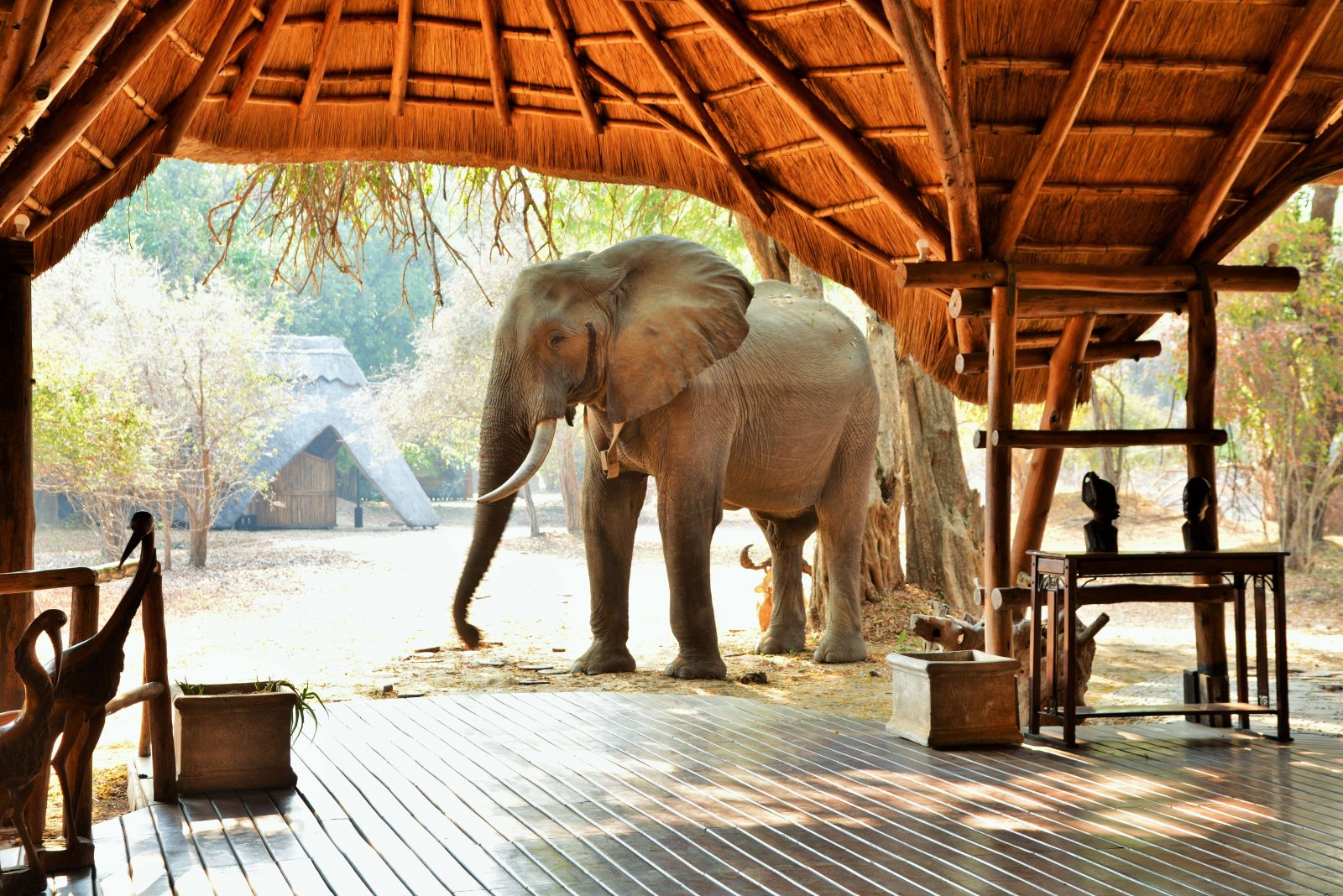 Five Hidden Hideaways of Zimbabwe with Jenman African Safaris 11