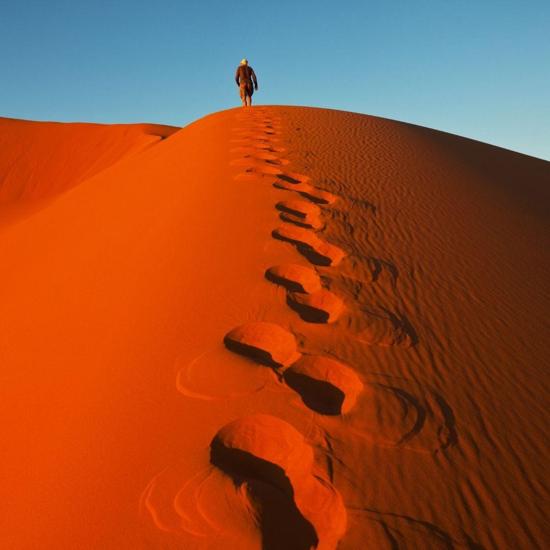 Safari Chronicles: Dunes of Namibia 1