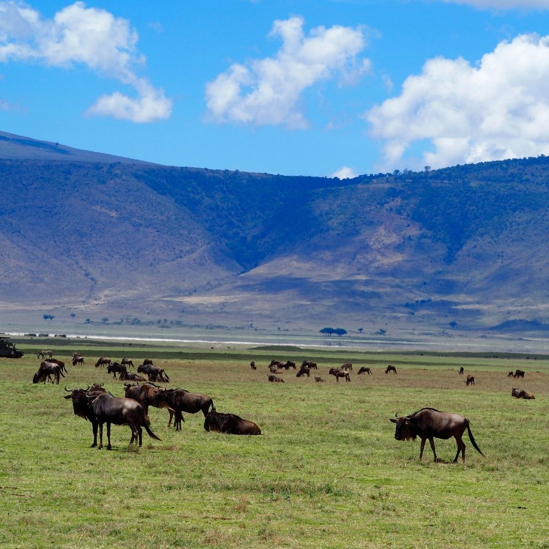 7 UNESCO African Wonders to Explore on Safari 16