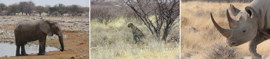 Safari Chronicles: Dunes of Namibia 5