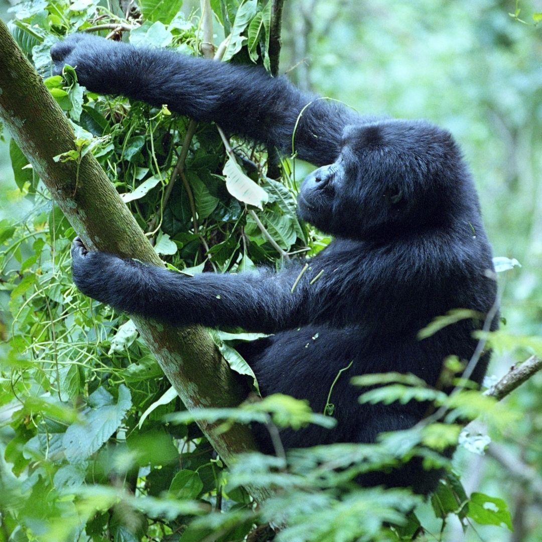 7 UNESCO African Wonders to Explore on Safari 17