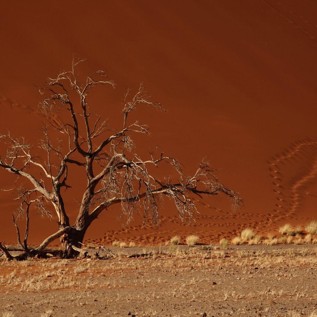 7 UNESCO African Wonders to Explore on Safari 14