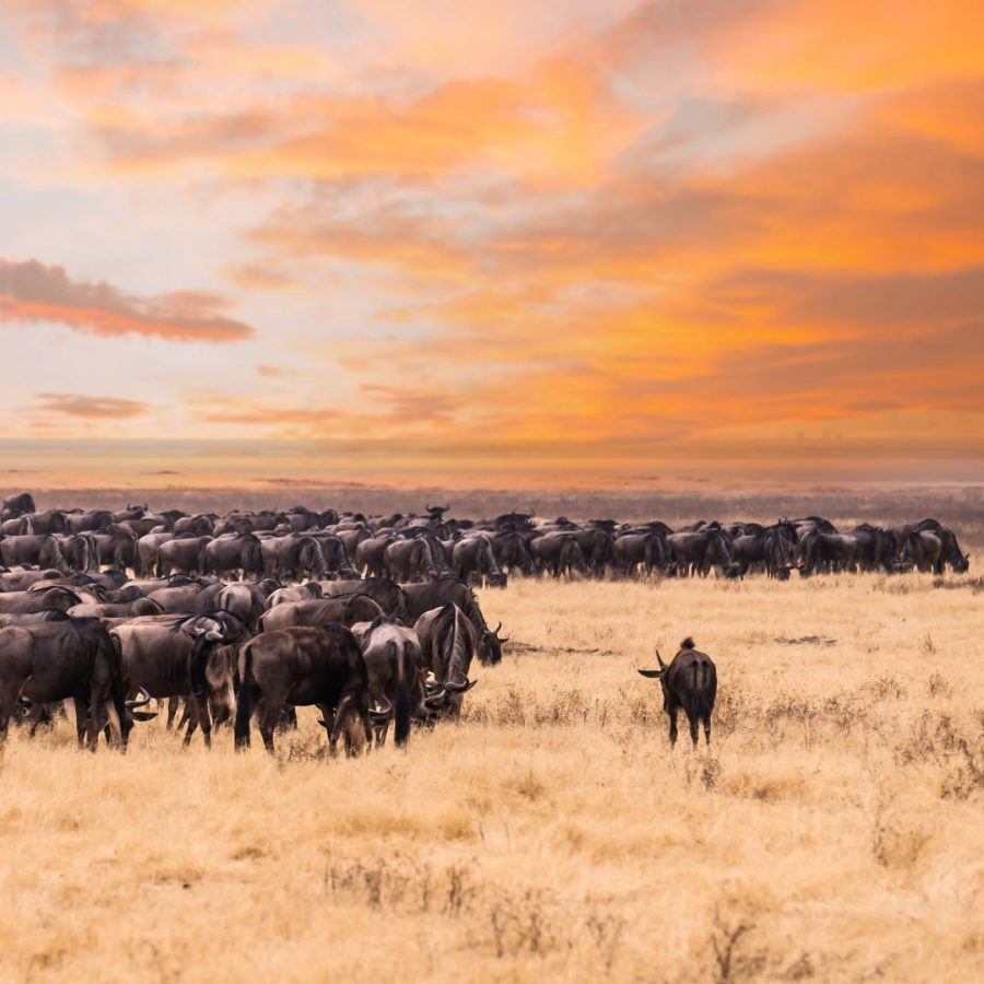Rise with the Dawn of Travel: Jenman African Safaris 12