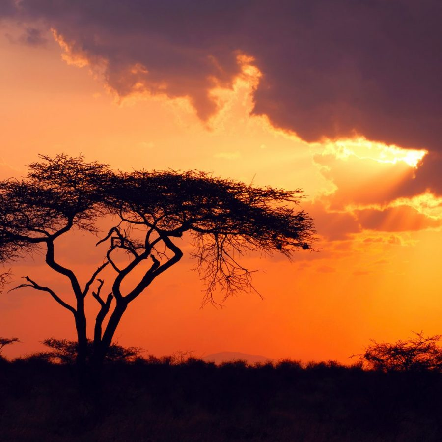 Rise with the Dawn of Travel: Jenman African Safaris 9