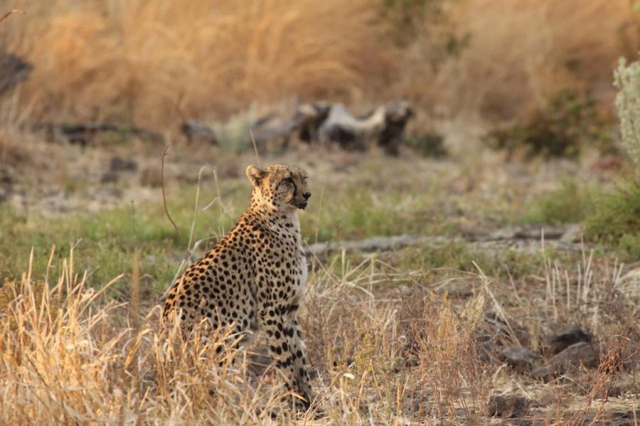 Rise with the Dawn of Travel: Jenman African Safaris 11