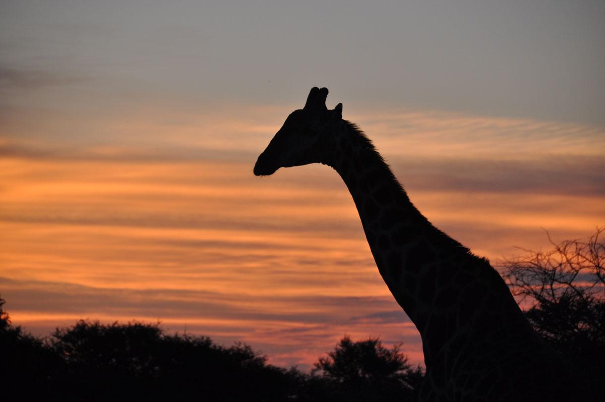 trans-african lodge safari